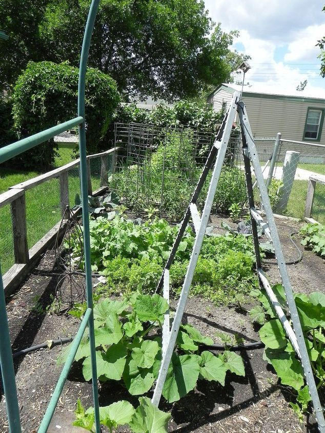 The garden is getting there...after a 5 inch rain...it is well watered and growing a successful crop of mosquitoes