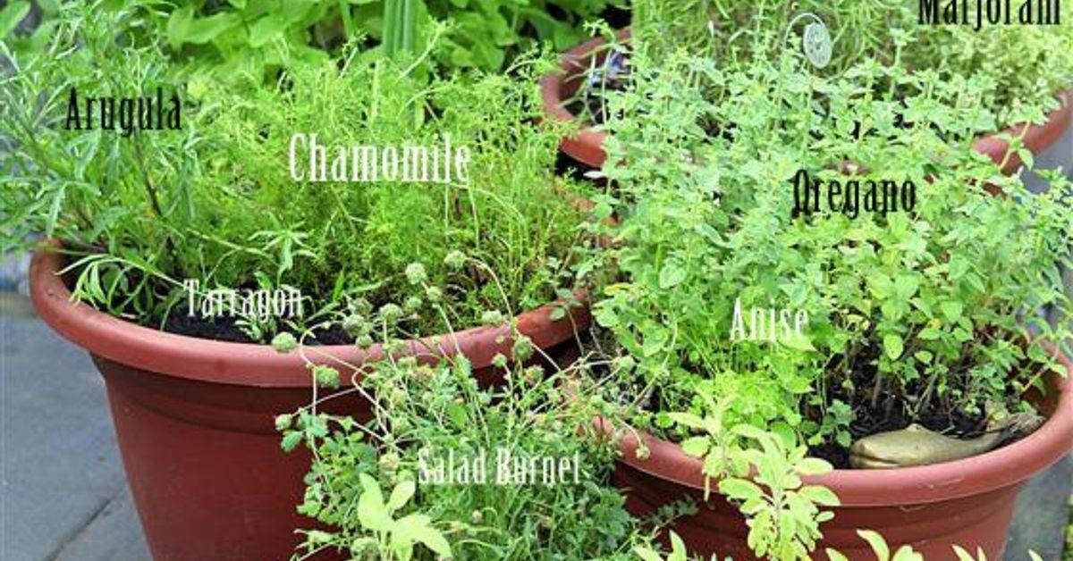 Grow Your Own Perennial Container Herb Garden | Hometalk