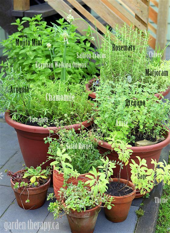 Grow Your Own Perennial Container Herb Garden Gardening Flowers Perennials