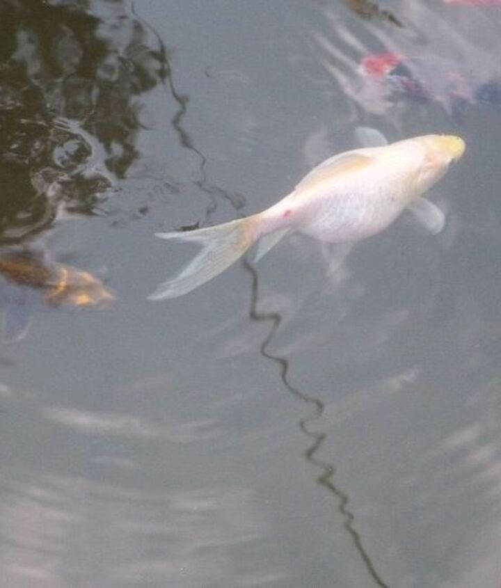 my fish, pets animals, ponds water features