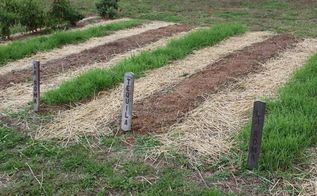 planning and planting a late summer garden getting extra from your garden space, gardening, Clear all of plant debris from the garden before winter and plant a cover crop like annual rye to build back nutrients and keep back weeds next year