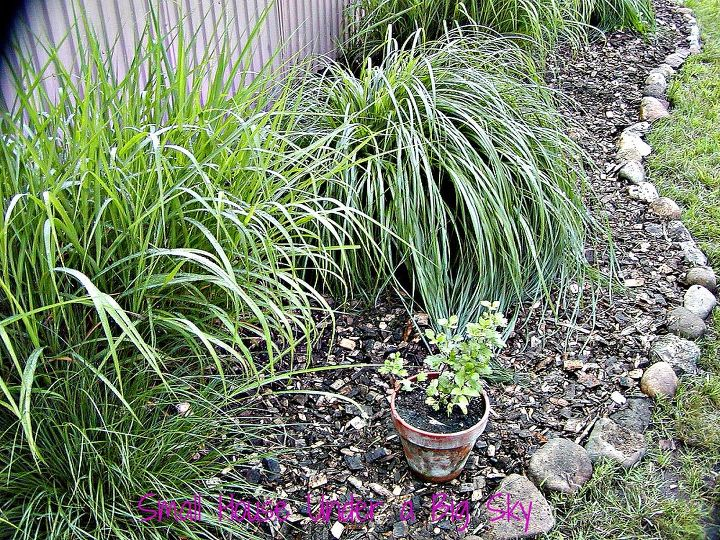 The side of the pole barn garden. This area is planted with low-upkeep clumping ornamental grasses.
