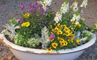 container garden in a vintage enamelware tub, container gardening, flowers, gardening, repurposing upcycling, Love my enamelware tub Before it was just leaning in a corner Love it more now I put a mixture of gravel packing peanuts in the bottom for drainage