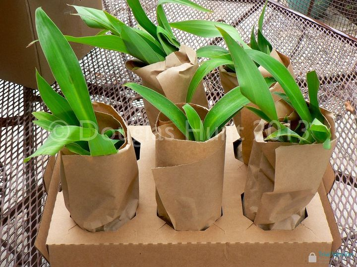Share Your Mail Order Plant Sources Hometalk