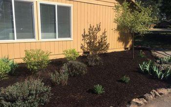 Dark Mulch Miracle: Flower Bed Transformation
