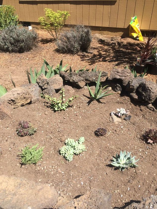 how to plant succulents, flowers, gardening, how to, succulents
