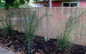 DIY ~ Beautify a Chain Link Fence With Bamboo!