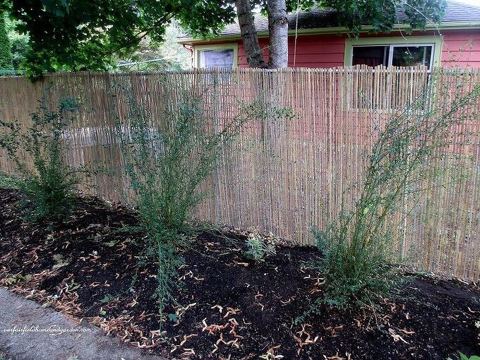 What Is The Best Privacy Screen For An Existing Chain Link Fence