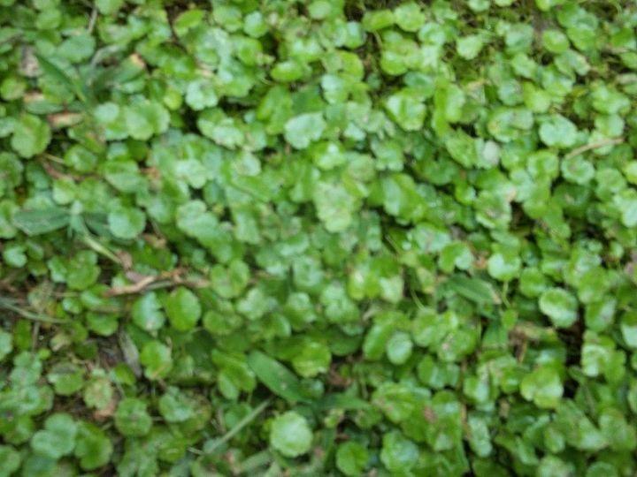 weed identification, gardening