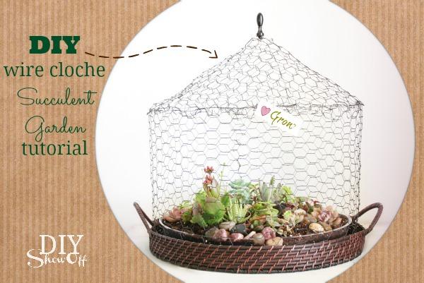 DIY Wire Cloche Succulent Garden | Hometalk