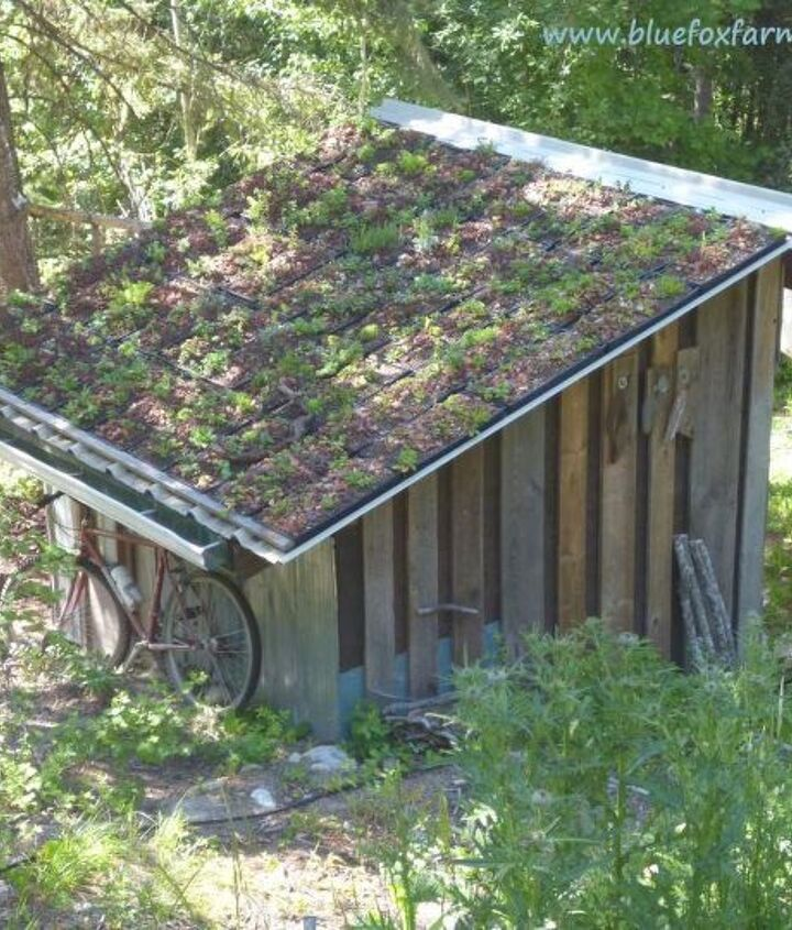 Flourishing in tough conditions, Sedum and Sempervivum thrive on the modular green roof - see more here; http://www.drought-smart-plants.com/modular-green-roof.html