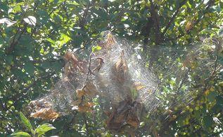 tree worms, gardening, pest control