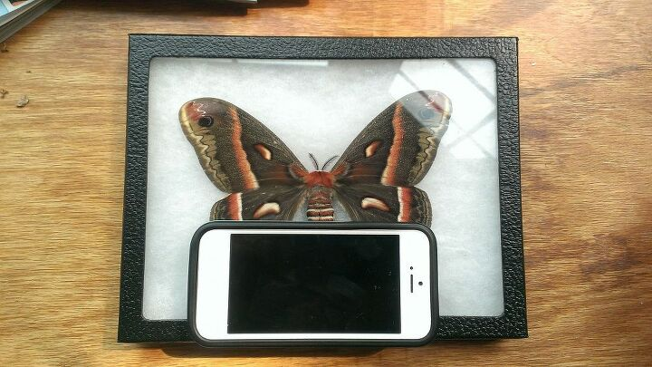 moth next to an iPhone5 for size reference