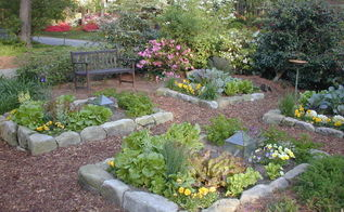 beautiful front yard vegetable garden it s organic too, flowers, gardening, go green, homesteading, A pretty front yard salad garden planted in raised beds edged with stone