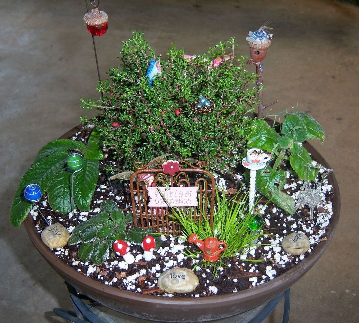 miniature gardening, container gardening, flowers, gardening, The finished garden All of the plants used except the fern flower even the miniature violet