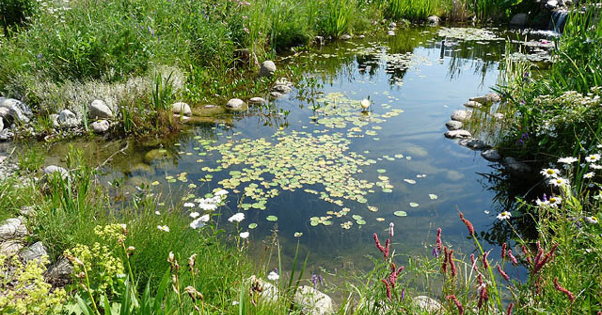 Water garden or backyard pond pond building instructions for Making a water garden