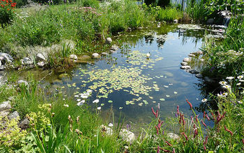 Water Garden or Backyard Pond - Pond Building Instructions