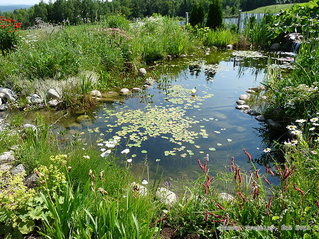Water garden or backyard pond pond building instructions for Making a backyard pond
