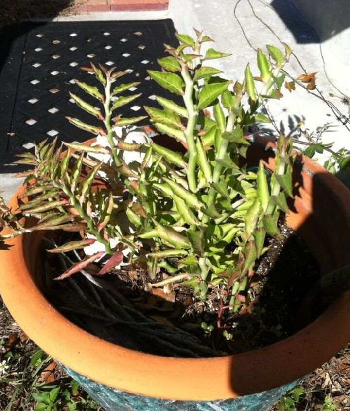 q hometalk members in florida i need an id for this plants friends from pensacola, gardening