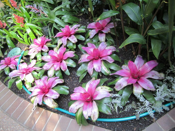 some pics from my vacation these are pictures from the opry gaylord hotel in, gardening, landscape