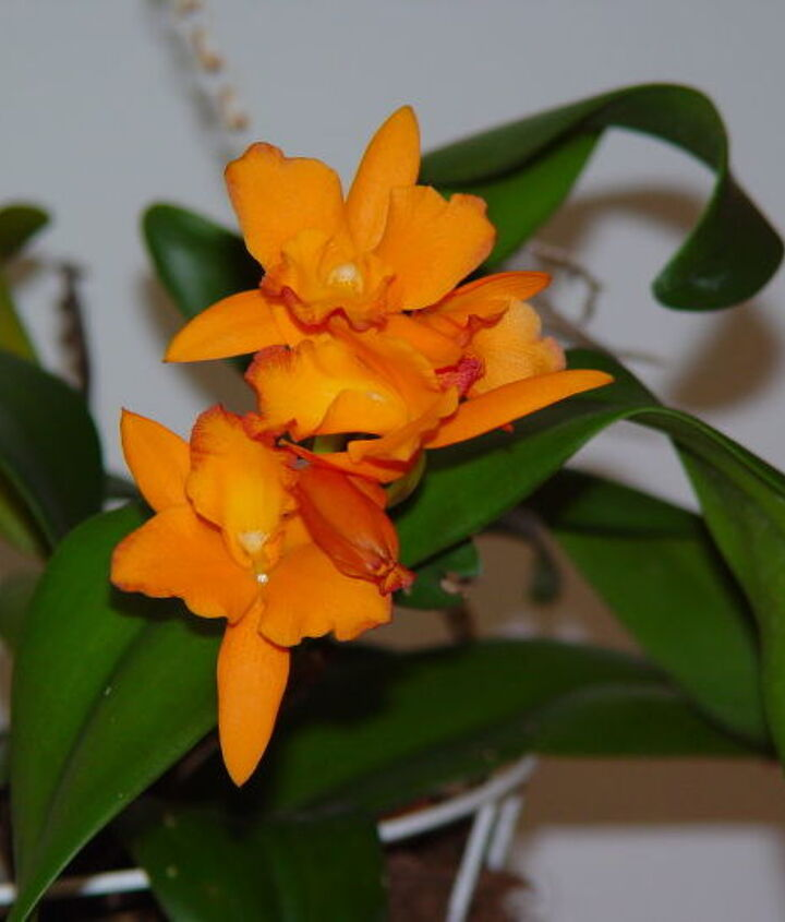 No name orchid