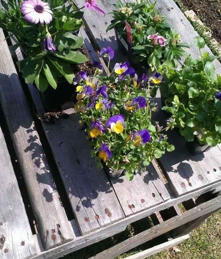 plants I used