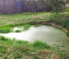 does this pond need cleaned before the ducks arrive, pets animals, ponds water features