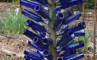 walter reeves has a bottle tree and a bottle vine, gardening, blue bottle tree in Walter s garden