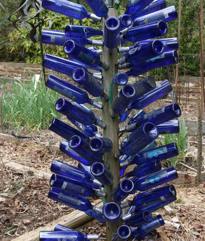 blue bottle tree in Walter's garden