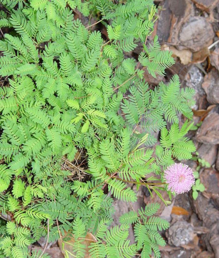 three little plants