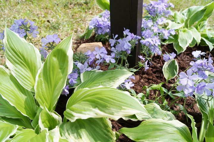 mailbox makeover, curb appeal, flowers, gardening, landscape