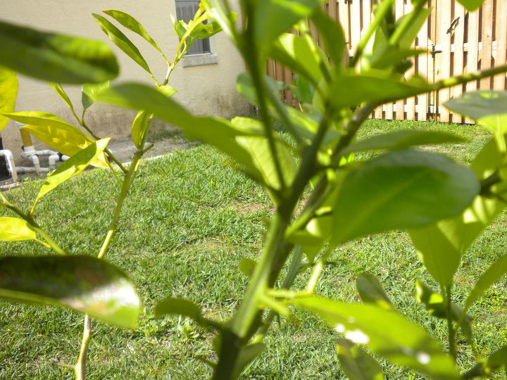 q thorny question, gardening