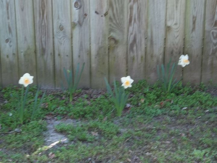 blooms, gardening
