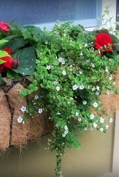 a new look for window boxes, gardening, windows