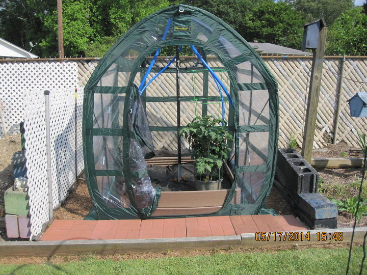 my recycled garden bed greenhouse, gardening