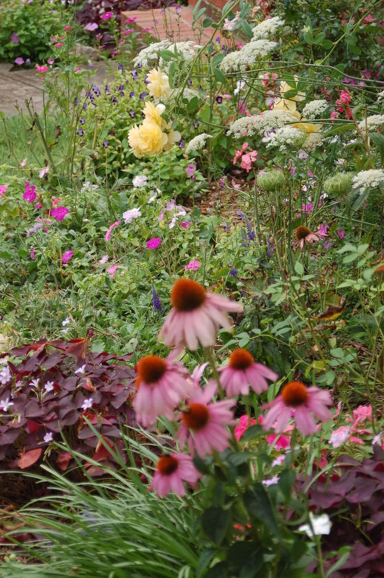 Oxalis, cone flowers, Graham Thomas rose, Queen Anne's Lace
