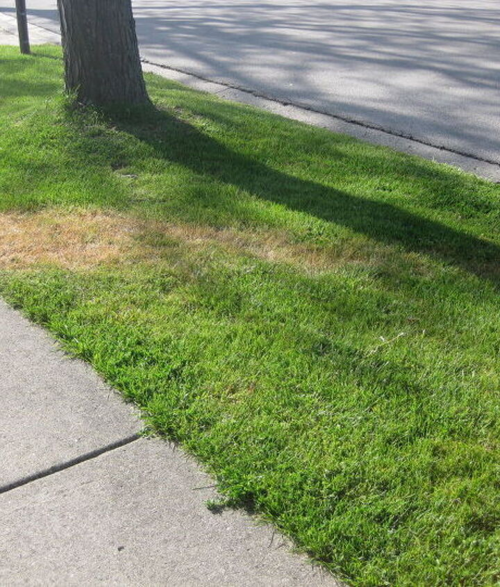 Trail of dead grass to the street