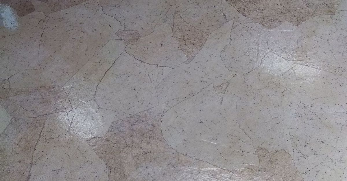 Dog Salon Paper Floor