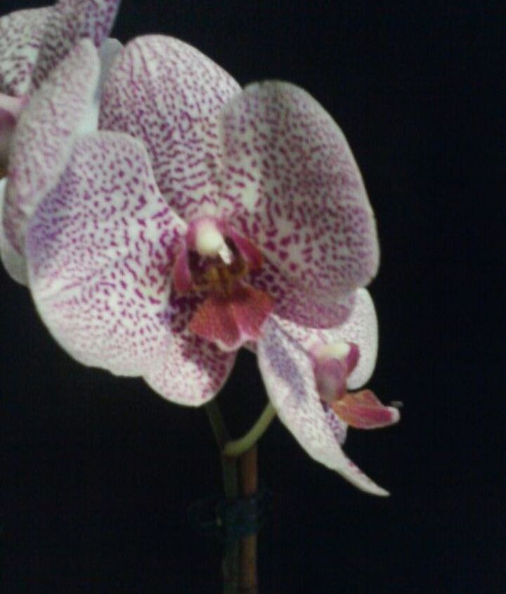 my orchids, gardening