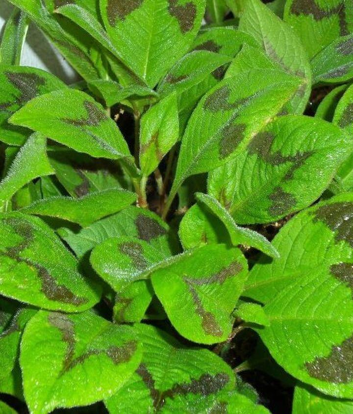 q plant question, flowers, gardening