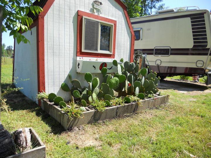 Contained Cactus Garden