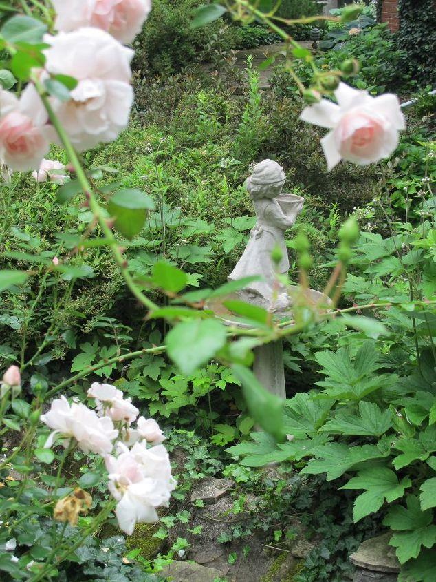 growing roses in a shade garden, flowers, gardening, hydrangea, landscape