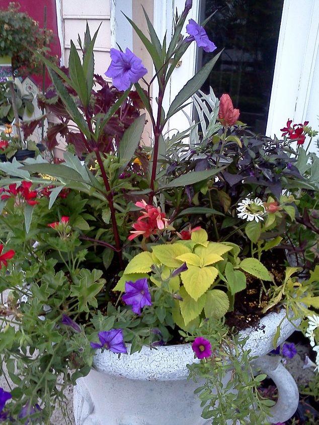 happy mother s day, gardening