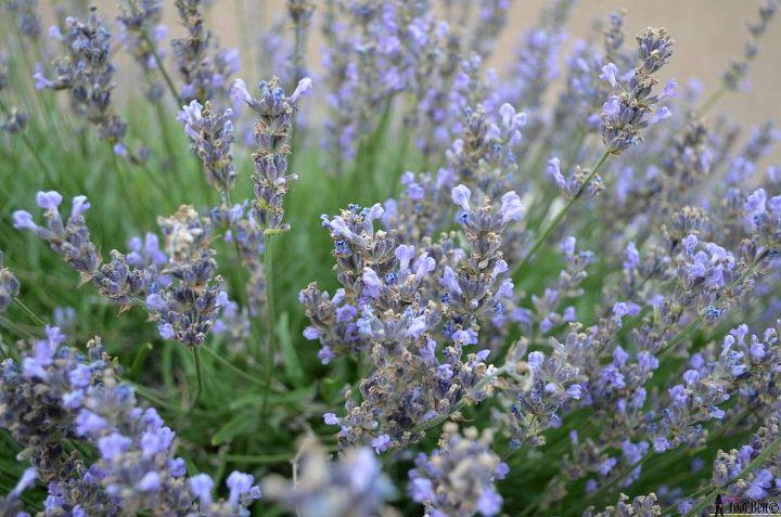 lavender tower, crafts, flowers, gardening