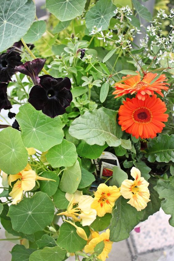 black velvet combined with bright orange