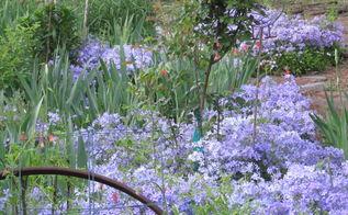 garden backyard flowers georgia, flowers, gardening, landscape, Wild Blue Phlox