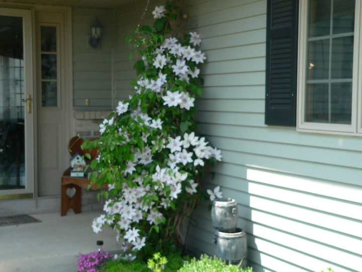 my front yard flowers, flowers, gardening, outdoor living, porches, Henri II by front porch Beautiful
