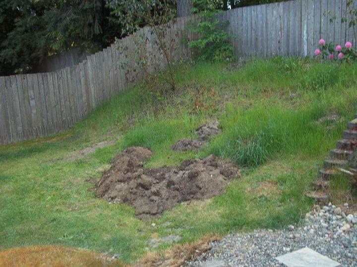 excavated weedy mulch/dirt from the from yard