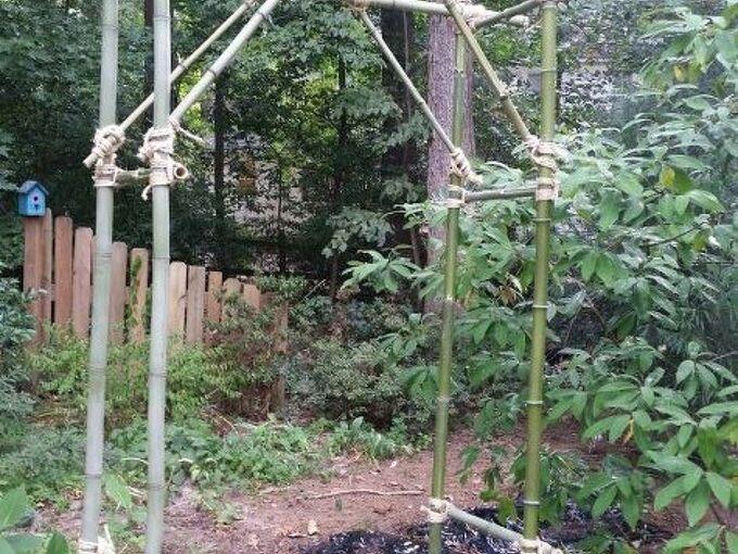 bamboo pergola arbor budget create, diy, gardening, repurposing upcycling