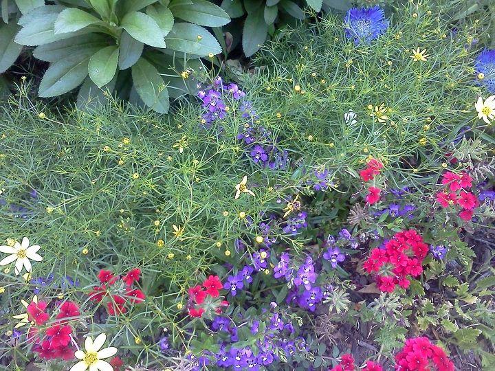 sweet combination, flowers, gardening, perennials